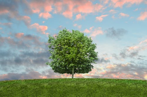 10 Reasons Why Environmental Protection Is Important