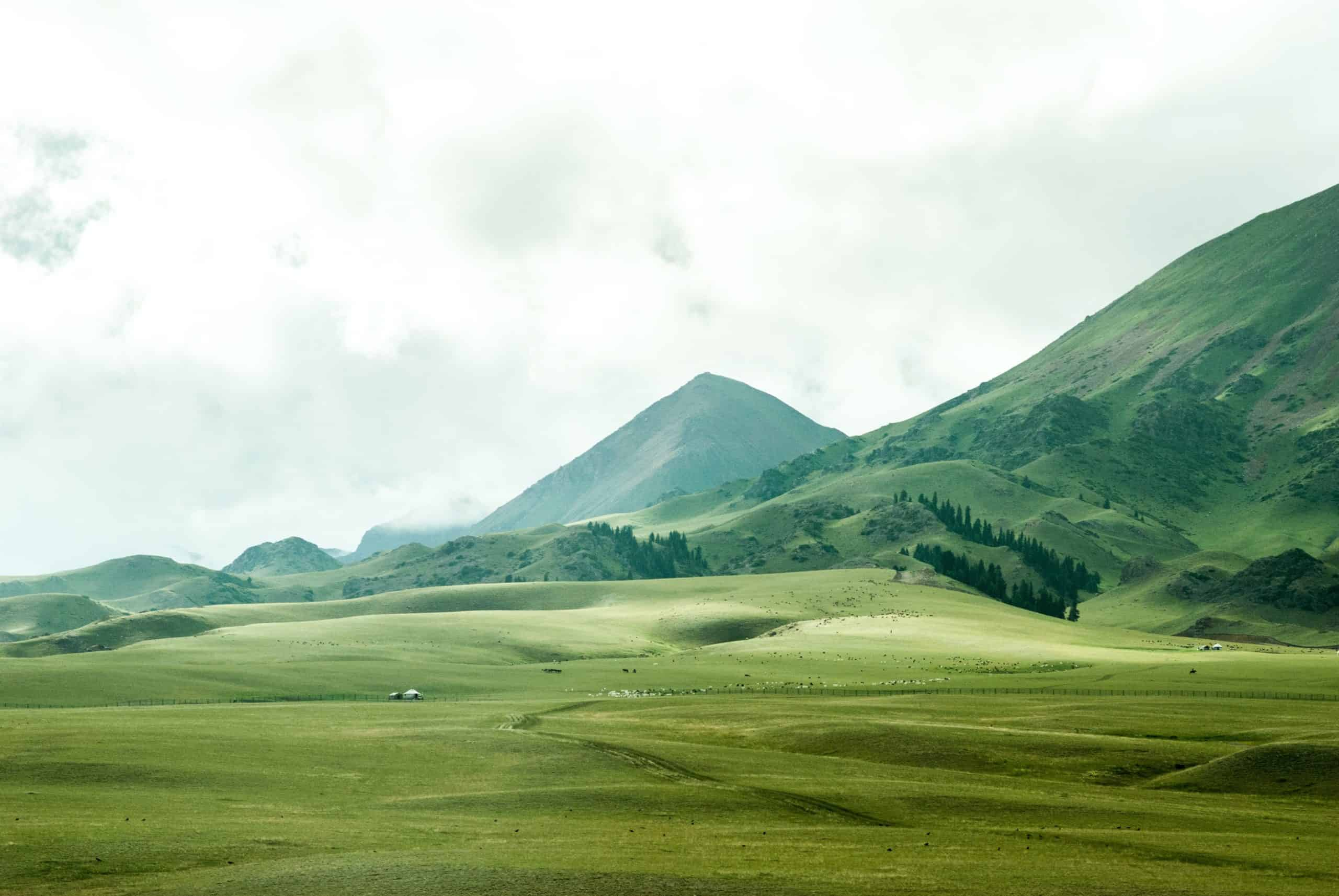 A large green field with a mountain in the background