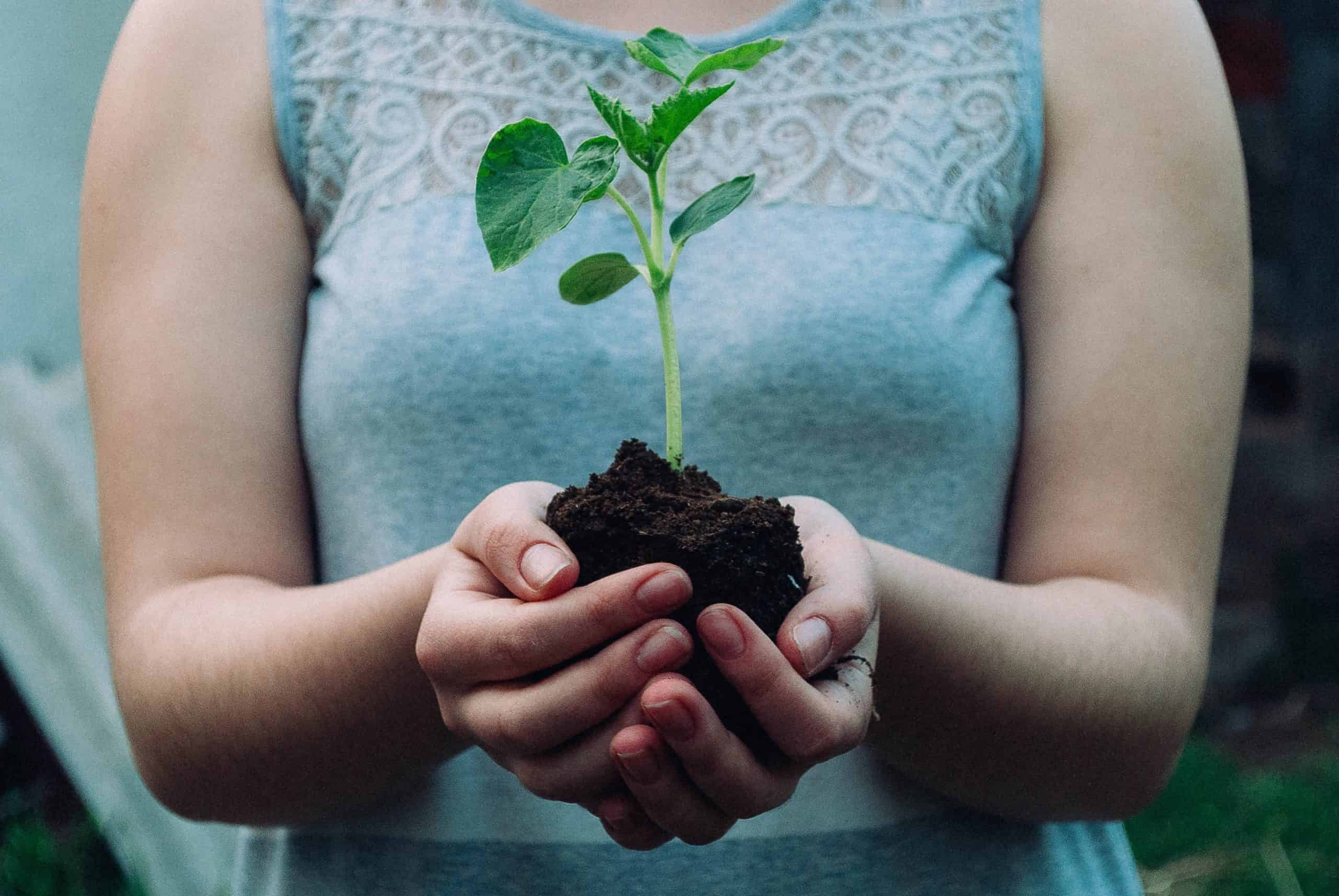 Eco Friendly Lifestyle: Ten Tips To Be Green At Home